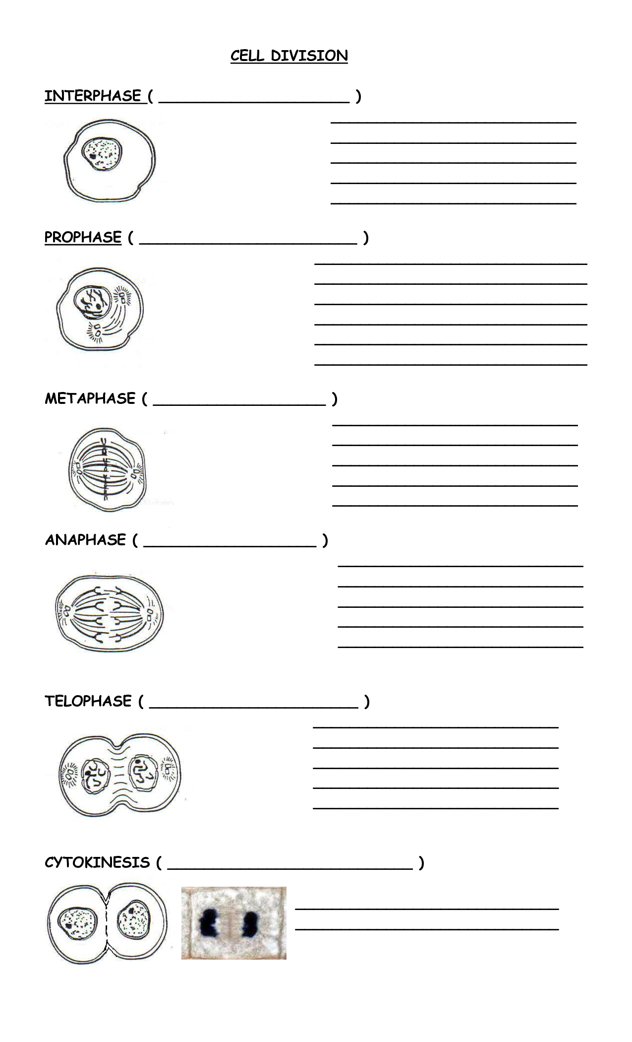 Printables Mitosis Worksheet notes worksheet davezan mitosis davezan
